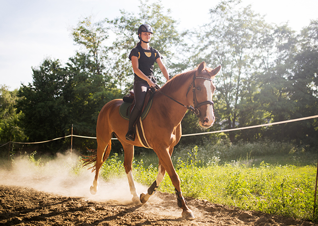 Cut resistant fabric for horse riding